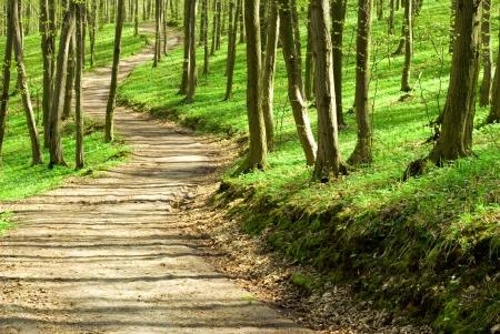 procházka: Sluneční světlo v zeleném lese Reklamní fotografie