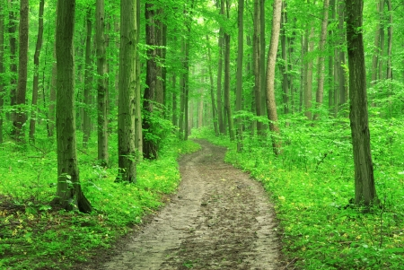 forest trees. nature green wood backgrounds photo