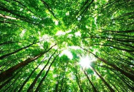 ecosistema: Sol de la mañana en el bosque verde
