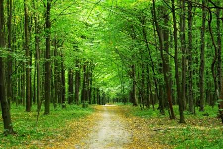 夏には美しい緑の森 写真素材