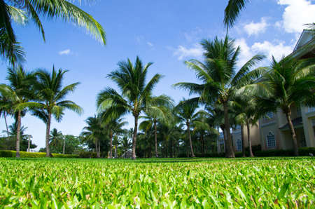 Green palm tree on blue sky background Stock Photo - 17781371