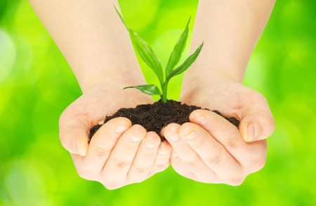 environmental protection: plant in female hands on green background            Stock Photo