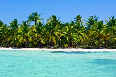 Tropical beach with sea wave on the sand and palm trees Stock Photo - 18249673