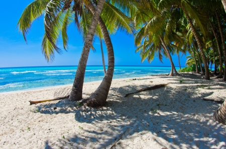 Beautiful beach with palm trees photo