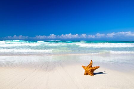 starfish with ocean , beach and seascape photo