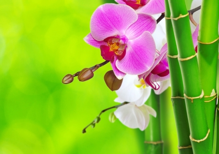 green bamboo and orchid isolated on a green background photo