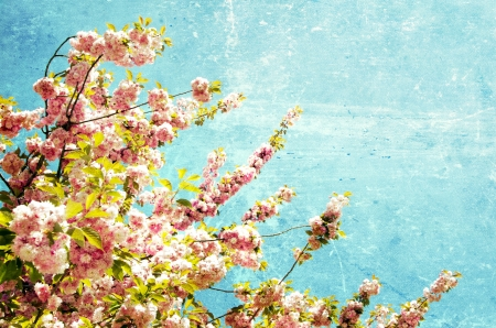 Close up of the grunge spring cherry flowers Stock Photo - 18408800