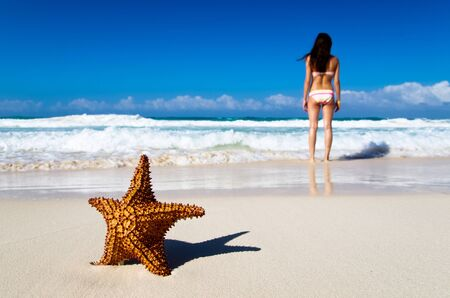 Red starfish on sunny tropical beach Stock Photo - 18408491