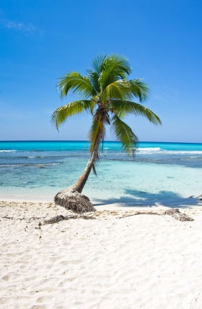 beautiful beach and tropical sea  photo