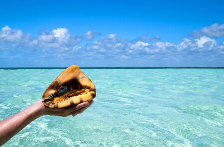 beach shell held by hands in a tropical place