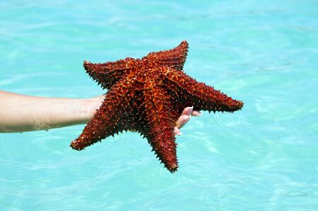 Starfish in hand in sea photo