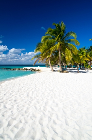 Caribbean Beach and Palm tree  .Paradise. Vacation and Tourism concept.  Stock Photo