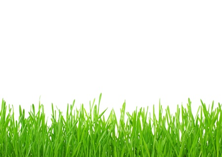 gras maaien: Groene gras op een witte achtergrond
