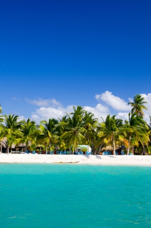 palm trees on tropical beach photo