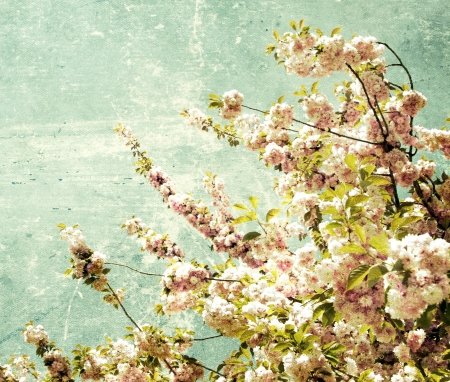Close up of the grunge spring cherry flowers Stock Photo - 18639017