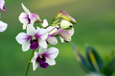 beautiful orchid on green background photo