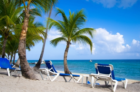 Beach chairs under a palm tree photo
