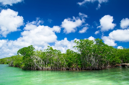 �rboles de manglar en el mar caribe photo