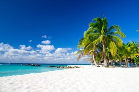 palmen op tropisch strand Stockfoto