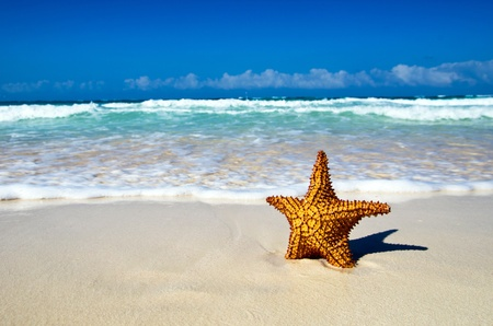 starfish with ocean , beach and seascape, Stock Photo - 18787219