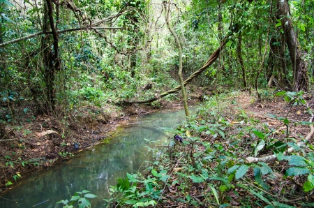 Stream in the tropical jungle photo