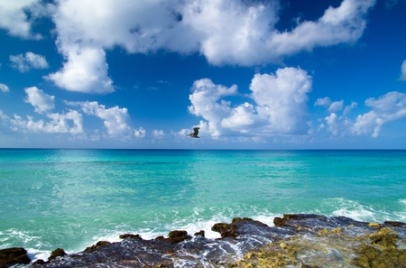 Caribbean clear beach and tropical sea photo