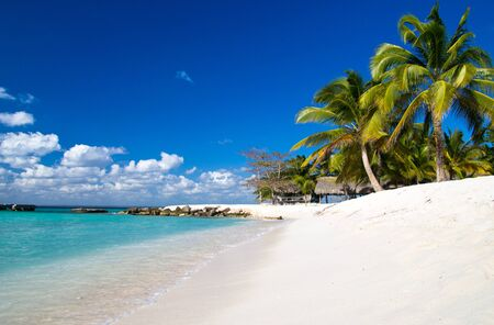 Caribbean Beach and Palm tree photo