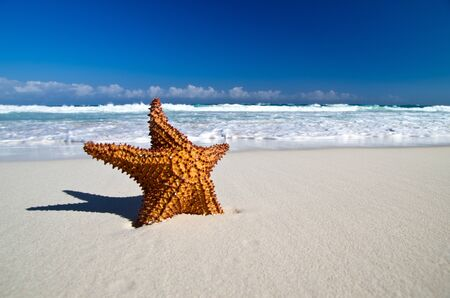 starfish with ocean , beach and seascape, photo