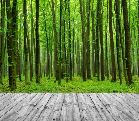 wood textured backgrounds on the forest backgrounds photo