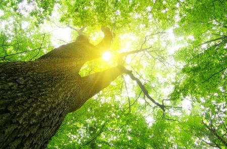 화창한 날에 녹색 숲 배경 스톡 콘텐츠