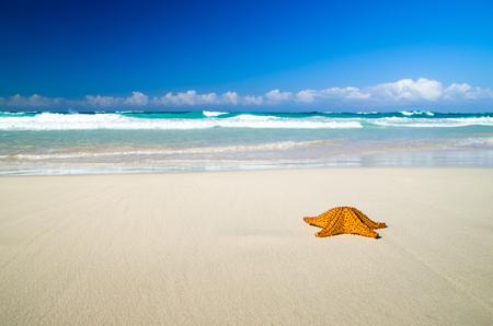 Caribbean starfish over sand beach Stock Photo