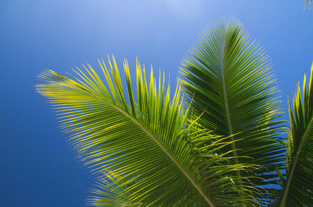 Palm tree on the sky photo