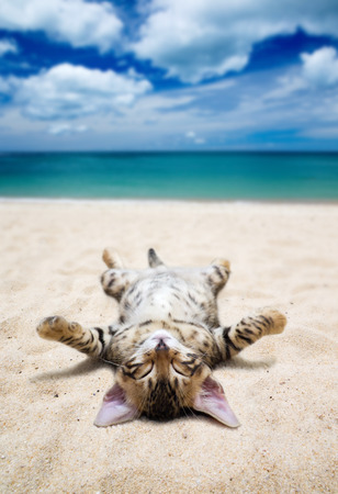 cat on  beach and blue sky Banque d'images