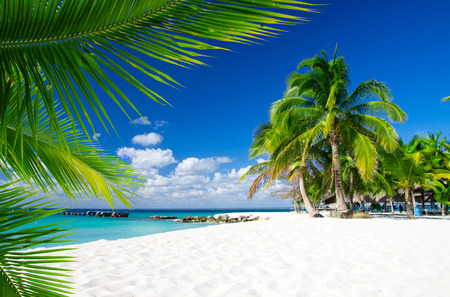 sea beach blue sky sand sun daylight relaxation landscape photo