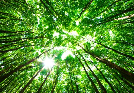 Vroeg in de morgen zon in het groene bos Stockfoto