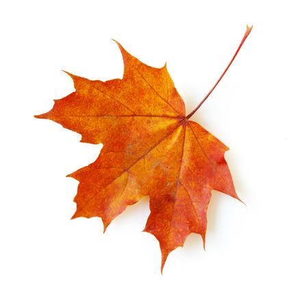 jesienią liść klonu samodzielnie na białym tle