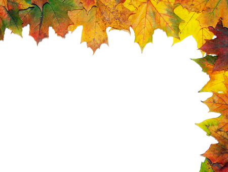 Frame with colored autumn maple leaves - white background photo