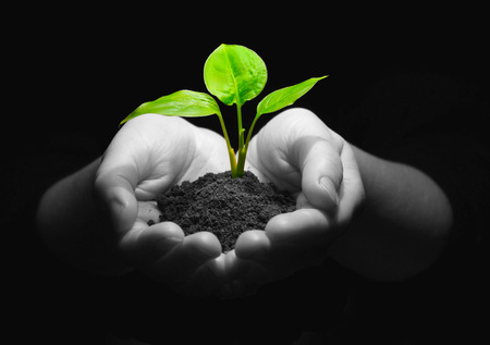 Hands holding sapling in soil Stock Photo - 32016811