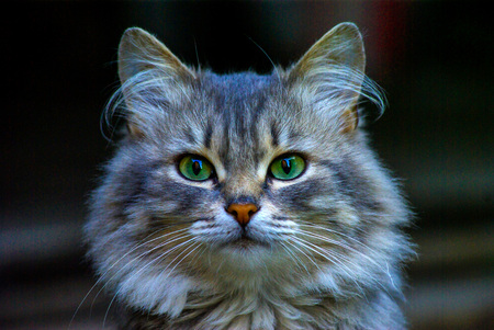 catlike: Portrait of young cat by a large plan Stock Photo