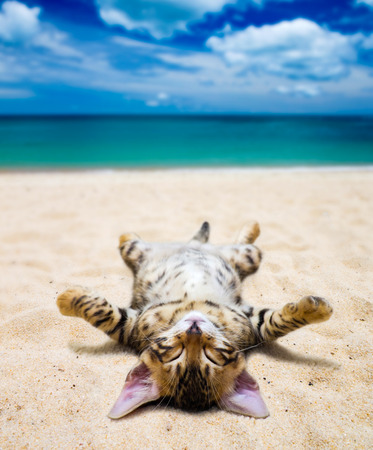 cat on  beach and blue sky Stock Photo