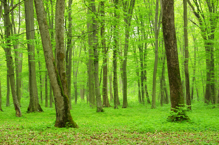 green light: green forest background in a sunny day Stock Photo