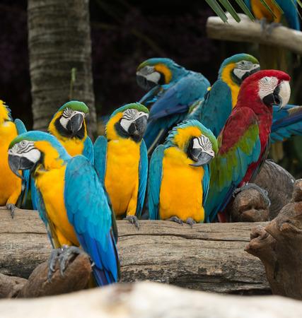 macaw bird sitting on the tree photo