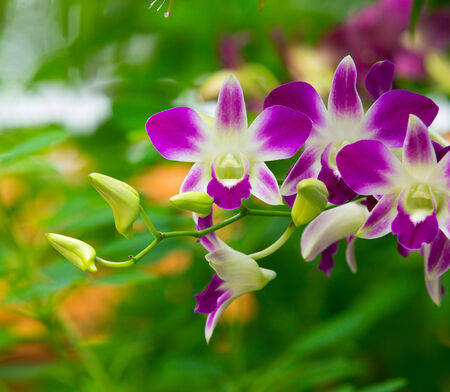 orchid on green background photo
