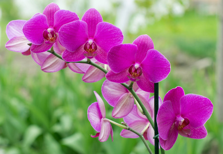 beautiful orchid on green background 스톡 콘텐츠