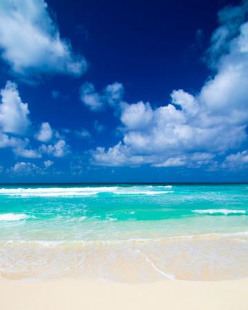 Caribbean Beach en Palm .Paradise. Vakantie en toerisme concept.