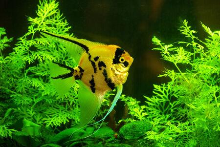 subaquatic: fish in a aquarium water