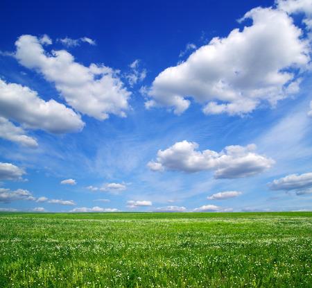 grass sky: field on  the blue sky