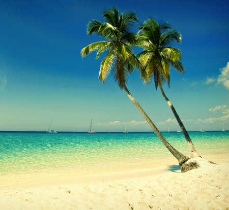 coconut tree: grunge image of tropical beach