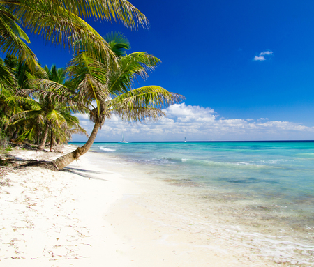 palm trees on tropical beach Stock Photo