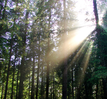 cathartic: a beautiful explosion of light from the sun deep in the forest.